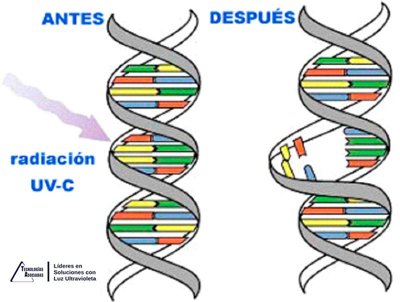 Desinfección COVID-19