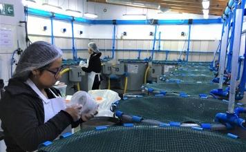 Desde Tongoy, la bioseguridad se transforma en servicio de exportación