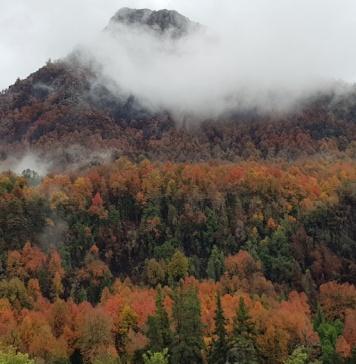 Firman Acuerdo de Producción Limpia para proteger el bosque nativo del Maule