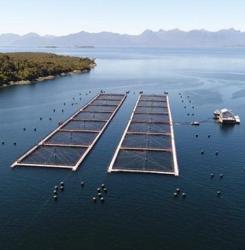 proyectos innovadores para el sector acuícola