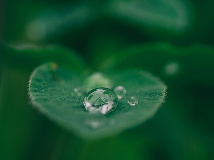 Huella de carbono: como reducirla con una cryptomoneda