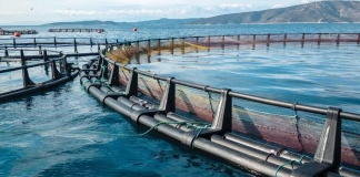 IncubatecUFRO lanza programa Corfo en apoyo a MIPES del sector acuícola para contrarrestar efectos de la crisis económica