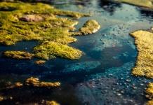 Skirt X12 anti bloom de Garware protege a centros de cultivos de floraciones algales nocivas