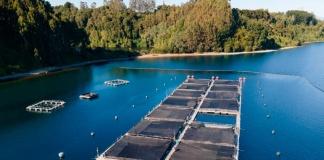 Salmones Camanchaca publica su séptimo reporte de sostenibilidad, en el que informa el progreso en su hoja de ruta y sus metas hacia el 2025.