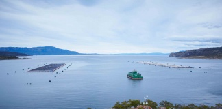 Se conforma primer Comité de Ética de la industria salmonicultora en Chile