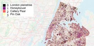 Inteligencia Artificialpuedeayudar a decidir dónde es mejorplantar árboles para minimizar el impacto del carbono en el medio ambiente