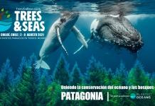 Festival de Conservación de Bosques y Playas Trees & Seas 2021. A una semana de la primera edicióndel Festival Trees & Seas Ya empezó la reforestación masiva de más de 20.000 árboles nativos en la isla de Chiloé