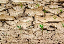 Cambio climático: del reto social a la gran oportunidad empresarial