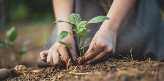 Nestlé anunció plan global de apoyo a la transición hacia un sistema alimentario regenerativo