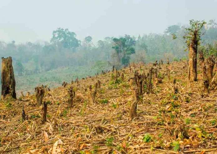 P&G acelera su acción sobre el cambio climático para cero emisiones netas de gases de efecto invernadero para el 2040