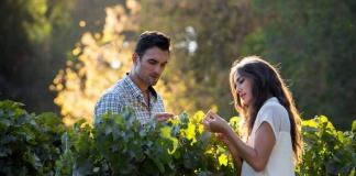 Viñas del Valle del Maipo reabren sus puertas para celebrar el día nacional del vino