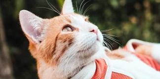 BodyCobre, la prenda veterinaria chilena que se exporta a 7 países del mundo